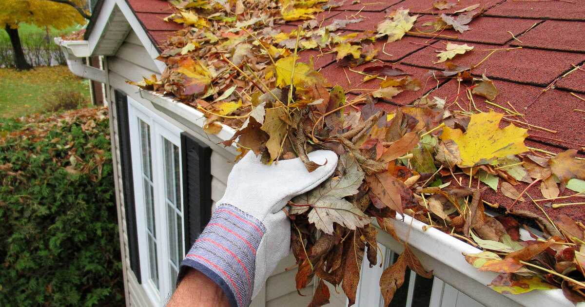gloved hand removing leaves from a gutter